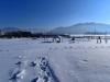 Zimní pohled do zahrady - leden 2017